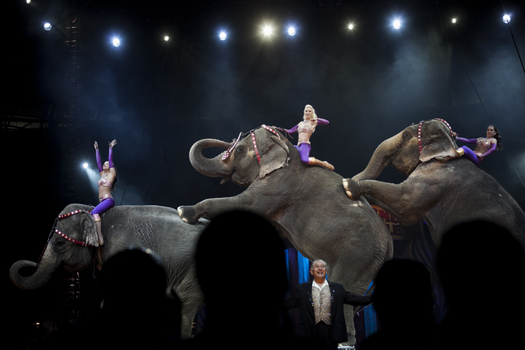 Elephants+perform+during+the+last+act+of+Friday%27s+circus+at+Diddle+Arena.+The+Ringling+Bros.+and+Barnum+%26amp%3B+Bailey+Circus+came+to+WKU+for+a+three-day+run.+The+show+featured+multiple+animals%2C+including+lions+and+elephants.