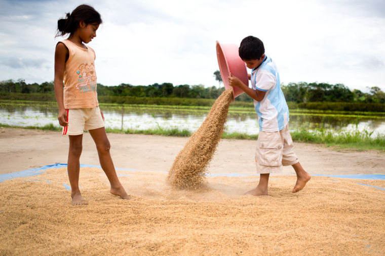 Yelba%2C+right+and+Amoudi+Gabriel%2C+left%2C+siblings+in+Yanashi%2C+Peru+dry+rice+in+the+sun+for+their+family.+Their+father+has+a+rice+field+down+river+and+it+must+be+dried+in+the+sun+for+two+to+three+days+after+picking+to+ensure+it+does+not+rot+or+sprout.%0A