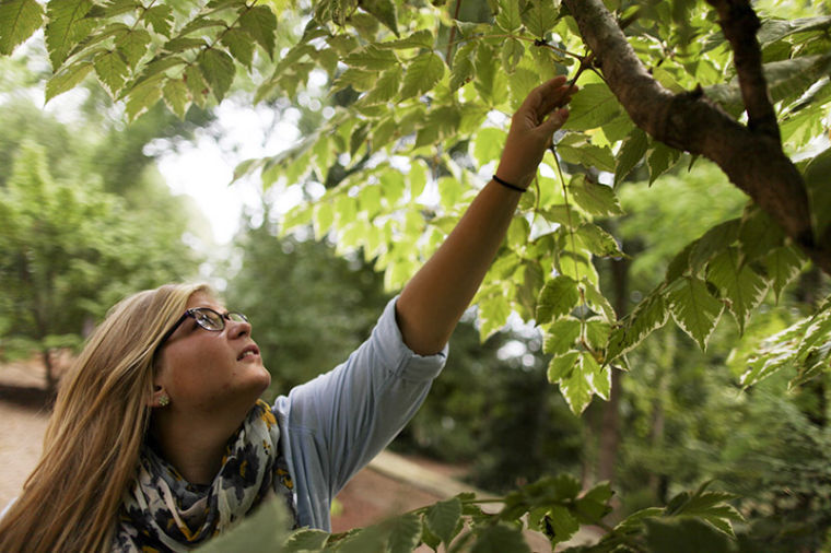 Evansville, Ind., seniorAllyson Davis has worked with the Baker's Arboretum since April. As an Agriculture major with an emphasis in Horticulture, Davis gets literal hands on experience working with weeding, planting, and propagating various plants.