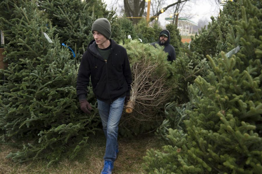 Freshly cut garland strands sit ready for purchase at Morgan's Fresh Cut Trees in Bowling Green on Monday. The garlands, trees and wreaths are shipped in from a Michigan tree farm. Nick Wagner/HERALD