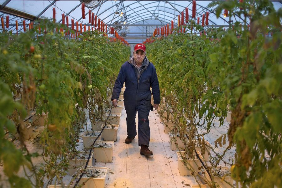 Gary Robbins walks through his greenhouse in Morgantown, on March 4. Robbins is an independent tomato grower that has been supplying WKU with fresh tomatoes since December 2014. Robbins grows around 4,000 tomatoes at one time and has been growing tomatoes for five years.