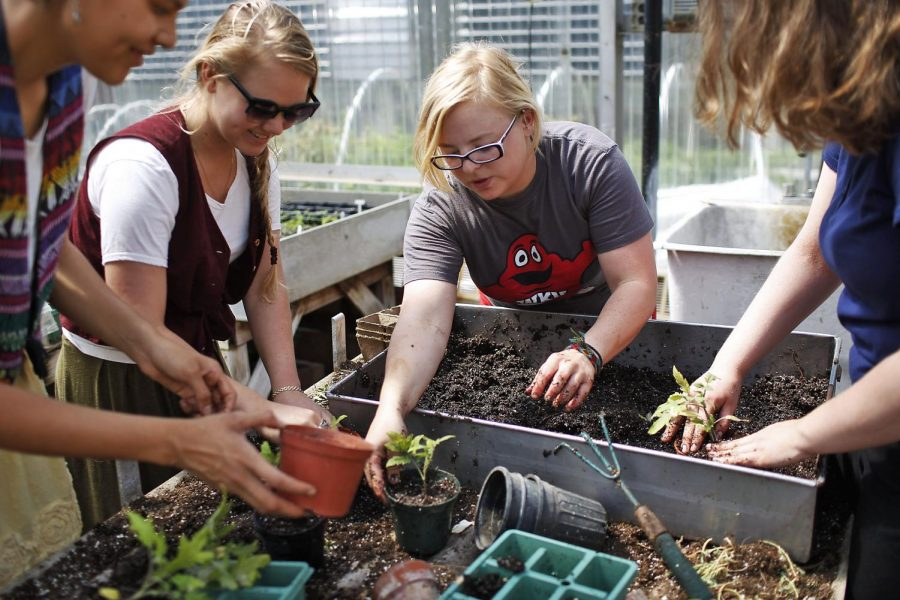 Linda Cruz (left), Shara Roten, Corinn Sprigler and Lindsey Humphrey (right) transplant plants allowing their roots to further expand in the soil in the greenhouse behind the Environmental Science and Technology Building on April 8, 2015. The Horticulture Club will be selling plants at the Environmental Science and Technology Building Friday, April 10, to fund materials for their club and their summer trip. Last Friday was their first sale of the semester and they made over $100. Nicole Boliaux/ HERALD