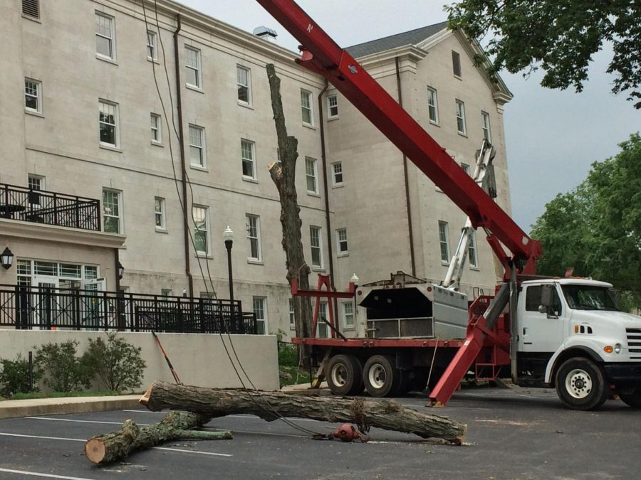 Tree+Removal