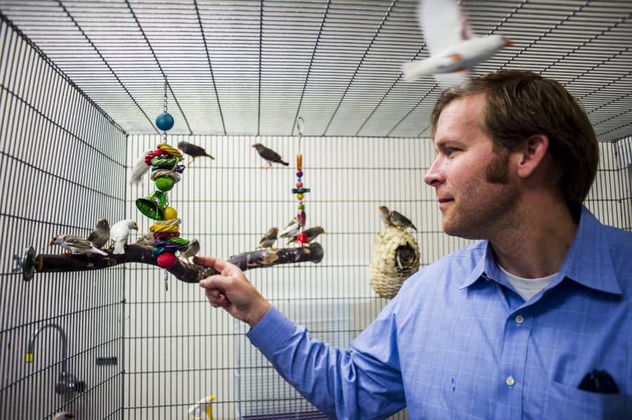 Dr. Noah Ashley, assistant professor in the department of biology, tries to get one of his zebra finches to crawl onto his hand in their cage at the Environmental Sciences and Technology building on Monday, April 18. Dr. Ashley will be headed to northern Alaska in June to study how arctic songbirds have adapted to diminished sleep patterns in the summer, and how that might help the understanding of sleep loss in humans. Emily Kask/HERALD.