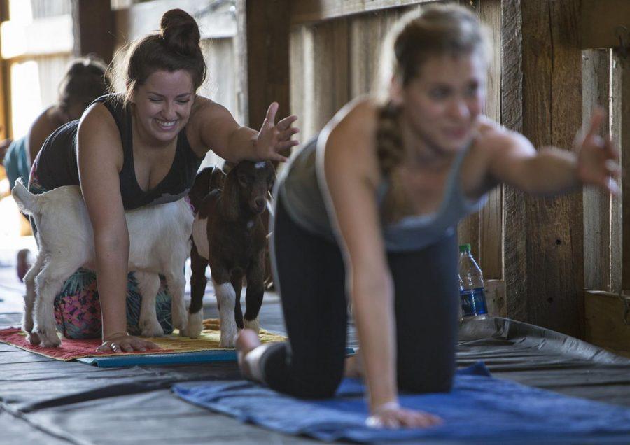 Be Happy Baby Goat Yoga