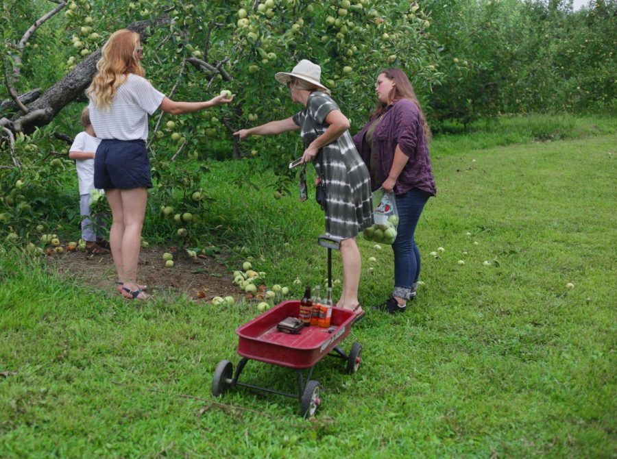The Rogers take their Sunday to pick apples in the vast rows of the trees at Jackson's Orchard.