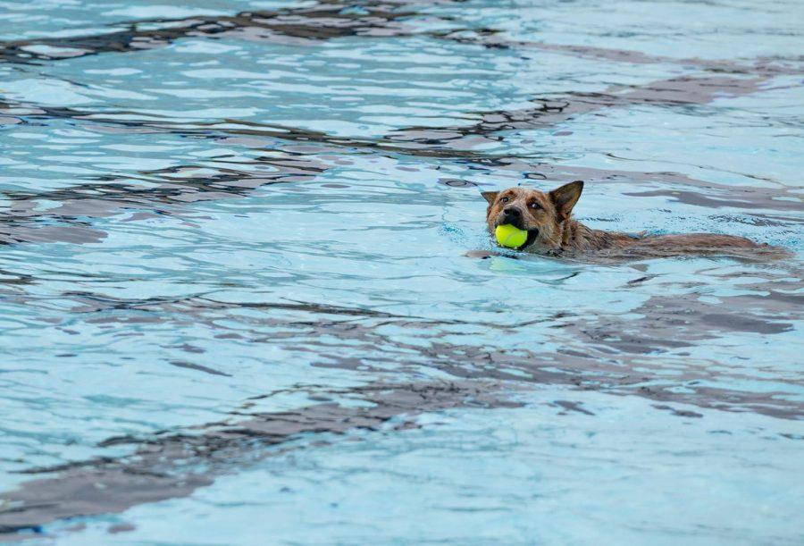Puppy+Paddle