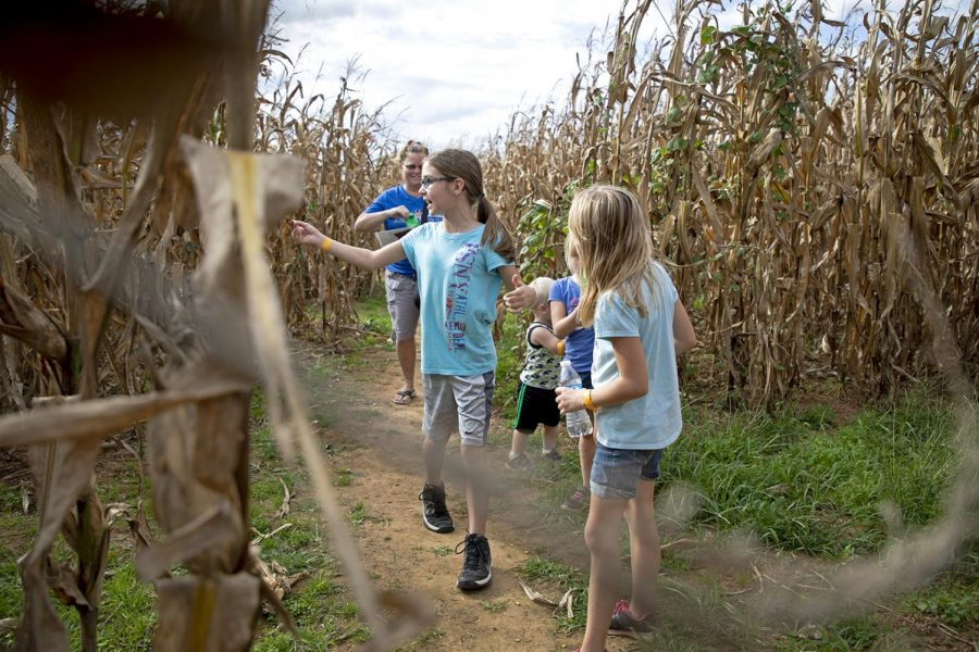 Kaylee Stinson, 9, with her Brother Kyler Stinson, 2 and her cousins Jacee Bandy, 6 and Addy Bandy, 9. Cindy Johns, is a relative and caregiver watching over the kids. Johns brought the kids to Chaneys Dairy Barn to go in the cornfield maze.