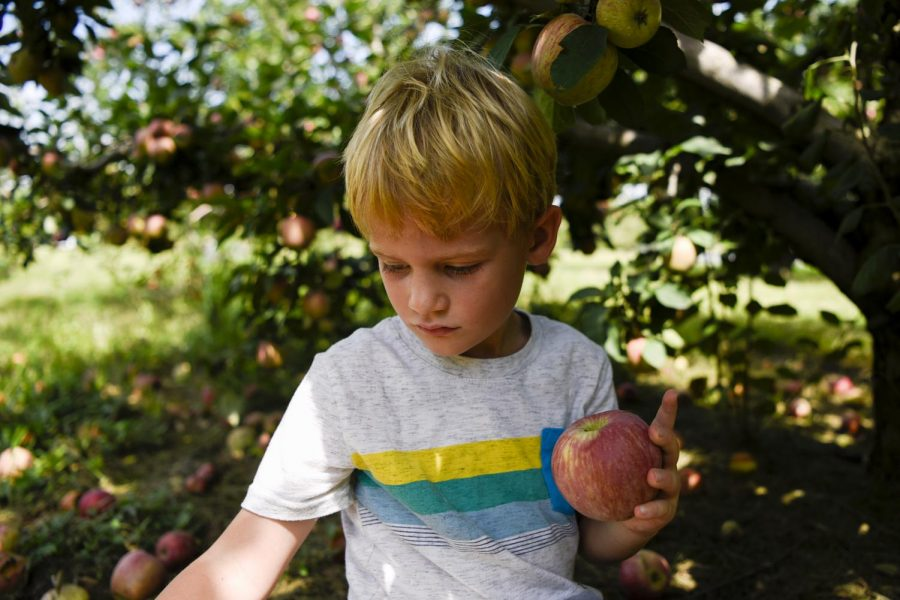 Sam+Humbert+crawls+under+a+tree+of+Red+Delicious+apples+to+find+the+best+fruits+Sunday+Sep.+1st%2C+at+the+annual+Apple+Fest+held+at+Jackson%E2%80%99s+Orchard.+Sam+attended+the+Apple+Fest+with+his+brother%2C+mother+and+father+who+all+picked+apples+with+plans+to+make+apple+Fritters.