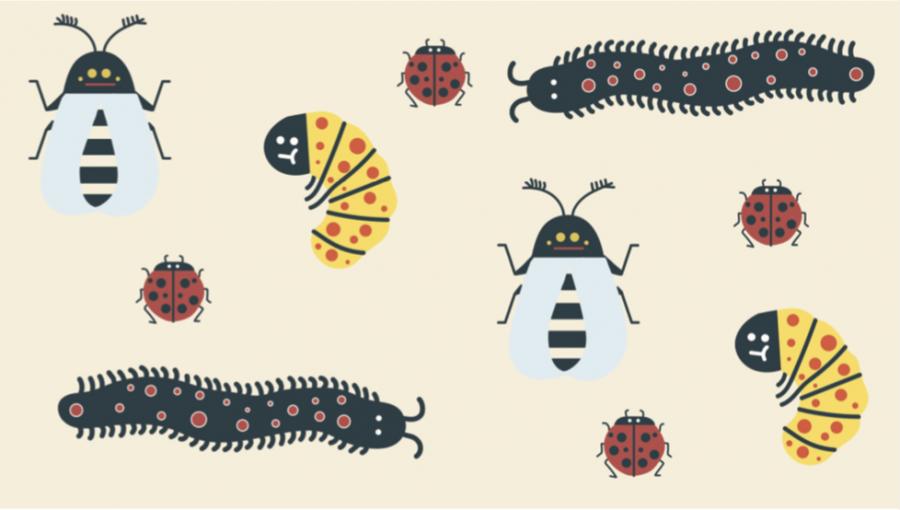 insect+illo