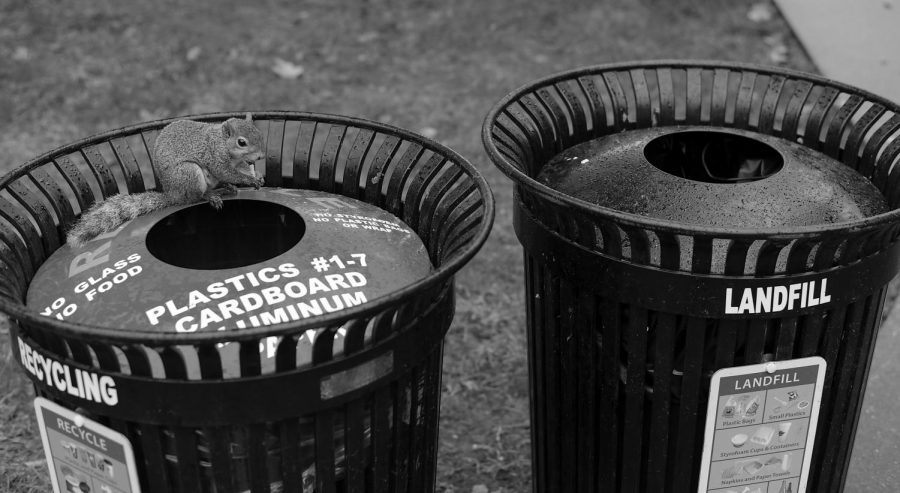 A squirrel eats a french fry on a recycling bin between Downing Student Union and Bates Runner Hall.