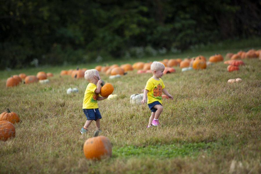 Twins+Jamey+and+Annetaylor+Gillan%2C+age+2%2C+walk+through+the+various+sizes+of+pumpkins+available+at+Jacksons+Orchard.+Parents+Luke+and+Katie+Gillan+brought+the+boys+to+Jackson%E2%80%99s+Orchard+on+October%2C+7%2C+2018+for+the+Annual+Pumpkin+Festival.