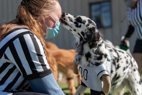 Autumn Maness, a worker at the Paw-A-Day Inn, is licked by Paislee the dalmatian during the Puppy Bowl on Feb. 5. Around 60 dogs participated in the event.