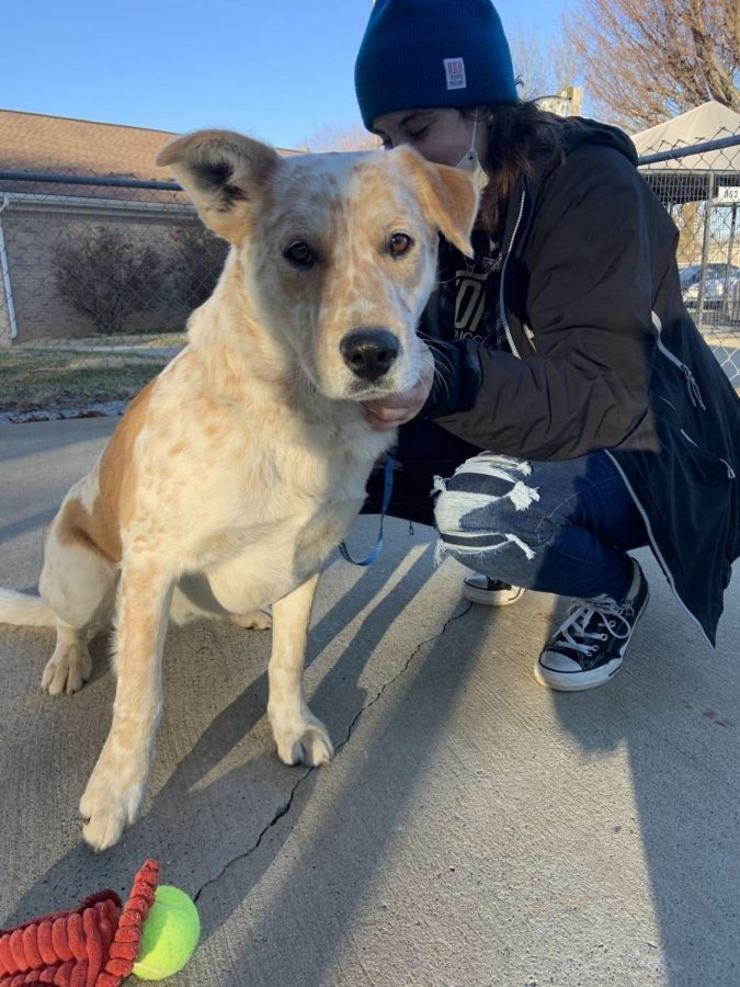 Getting Colby Jack at the beginning of quarantine was an adjustment for owner Brooke Litteral, as she was getting used to her newfound responsibilities as a dog mom. But, she wouldn't change her experience adopting her pup, Litteral said.