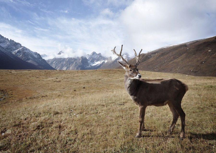 #50. Alaska