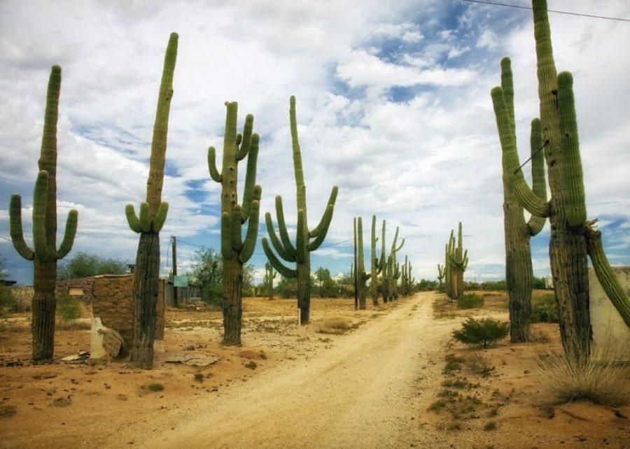 #1. Arizona