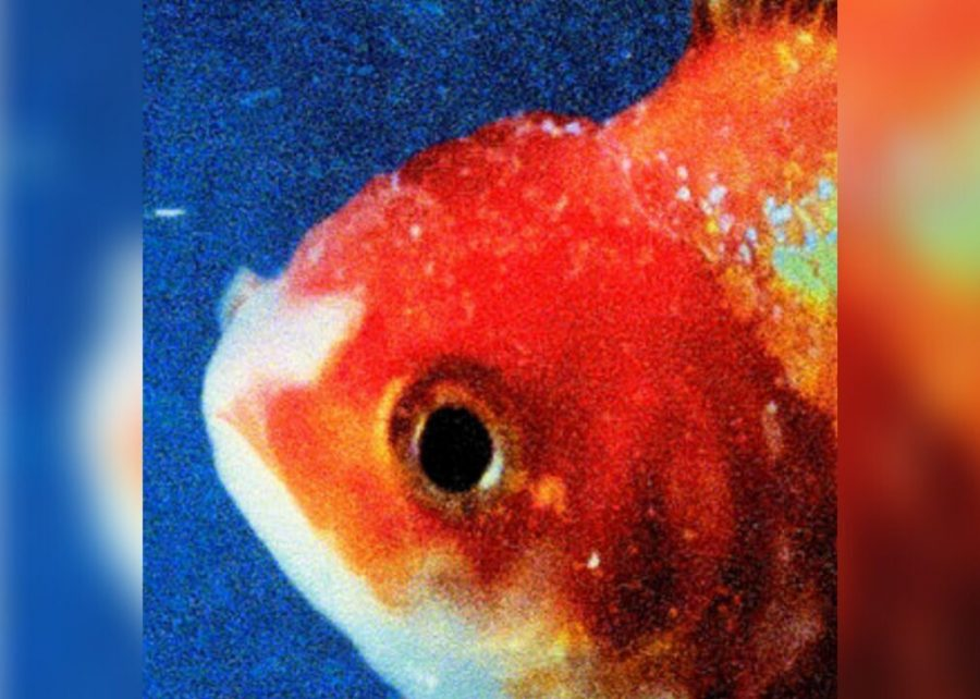 %2396.+%22Big+Fish+Theory%22+by+Vince+Staples