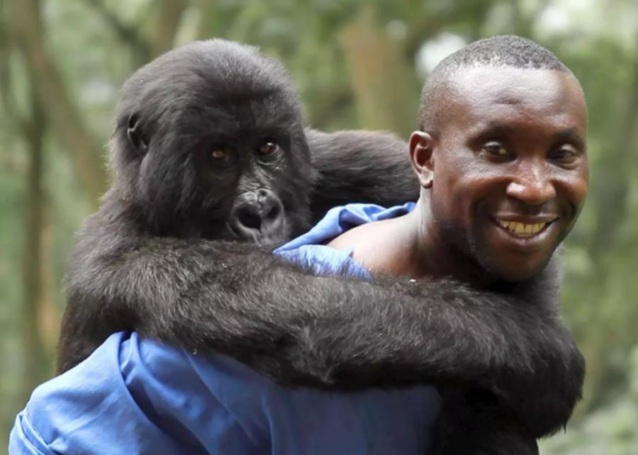 #5. Virunga (2014)