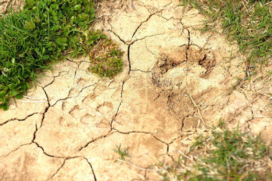 A+footprint+indents+the+soil