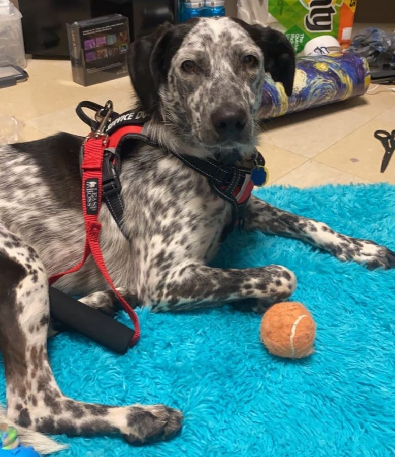 Formerly missing service dog found