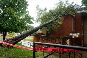 As seen on Tuesday, Aug. 31 2021, a tree lays fallen on the East side of Munday Hall.